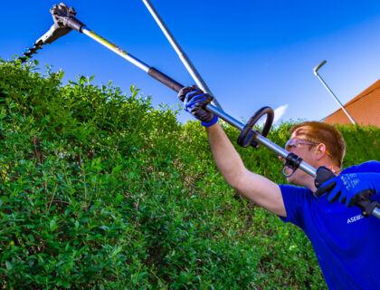 ASE Gartenarbeit, Baumschnitt, Gartenpflege - Thujen / Hecken schneiden