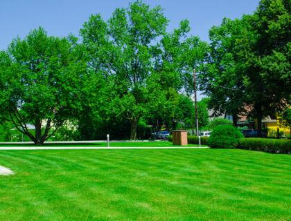 ASE Gartenarbeit, Baumschnitt, Gartenpflege - Rasen